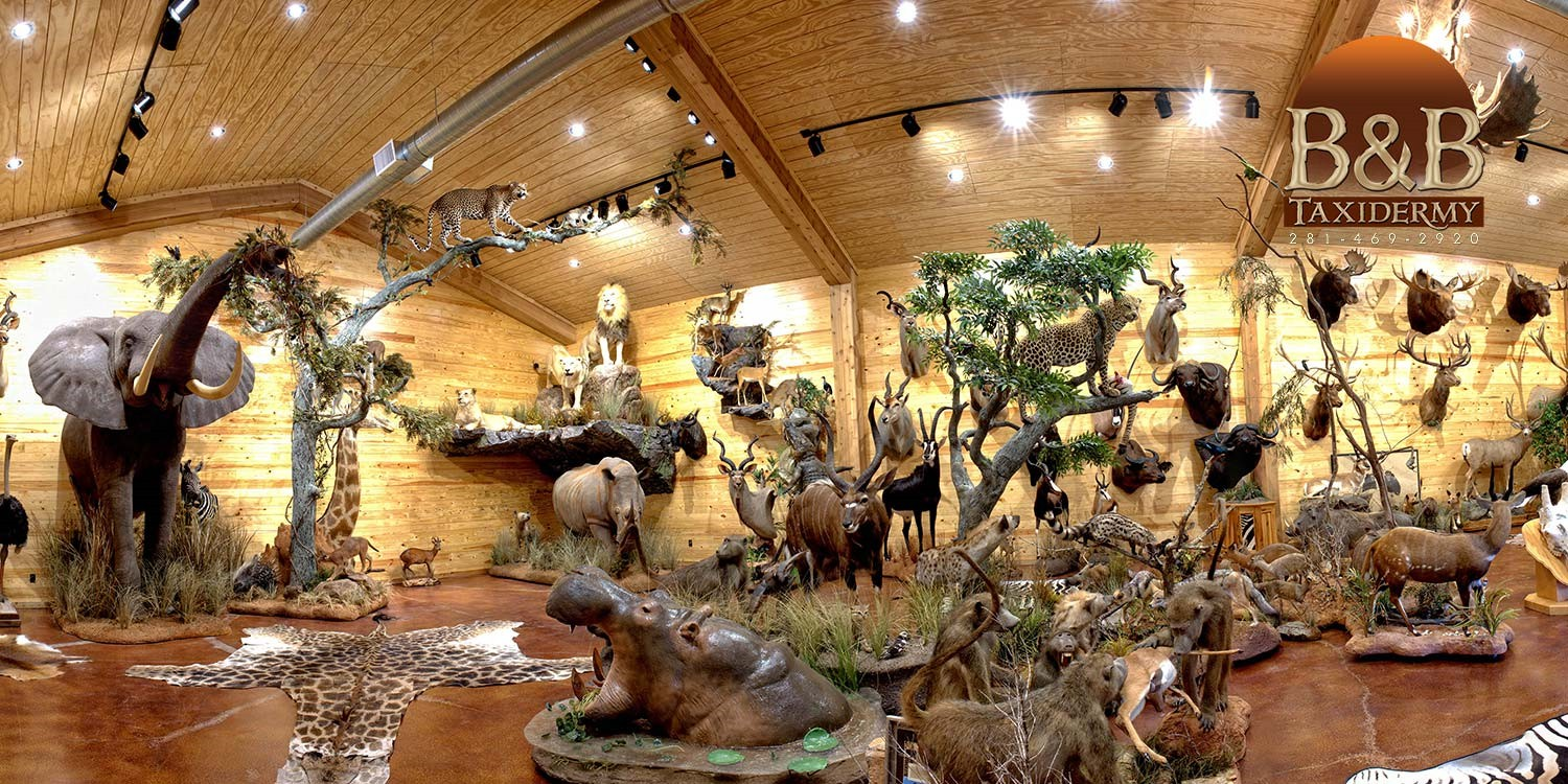 Taxidermy African North American Exotics Trophy