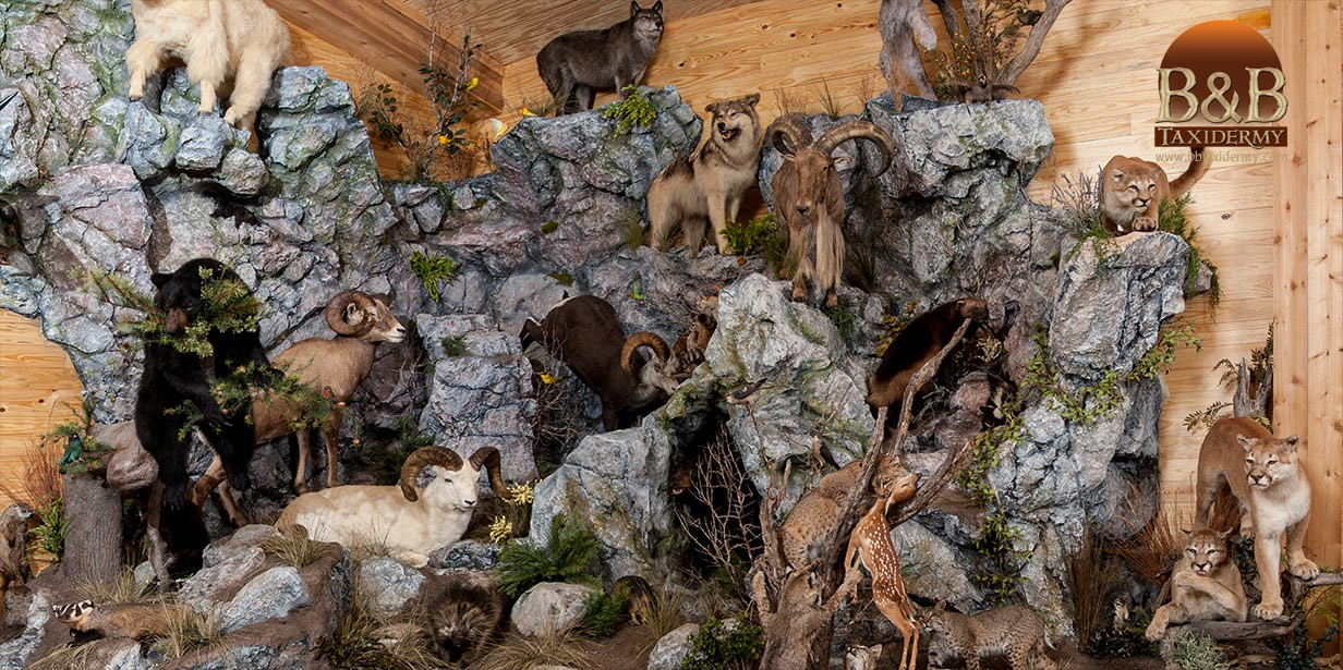 taxidermy_mounts_07