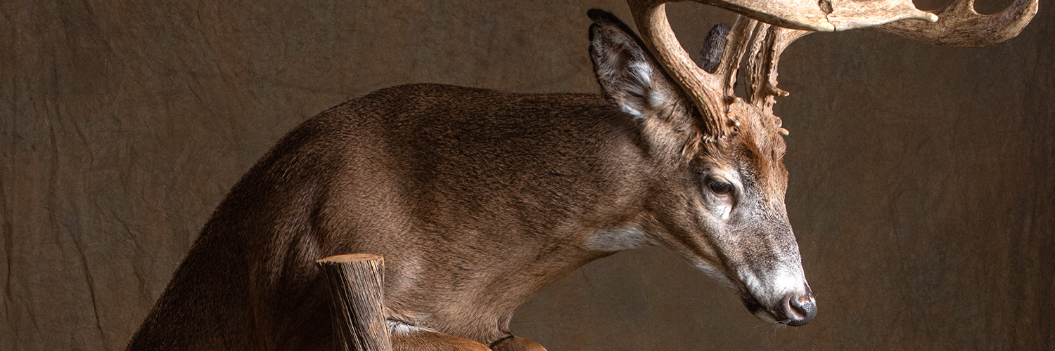 Conroe Taxidermy Services by B&B Taxidermy in NW Houston Texas