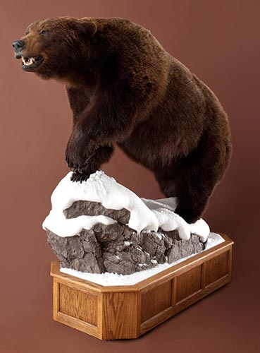 Life-Size Taxidermy Mounts and Bases