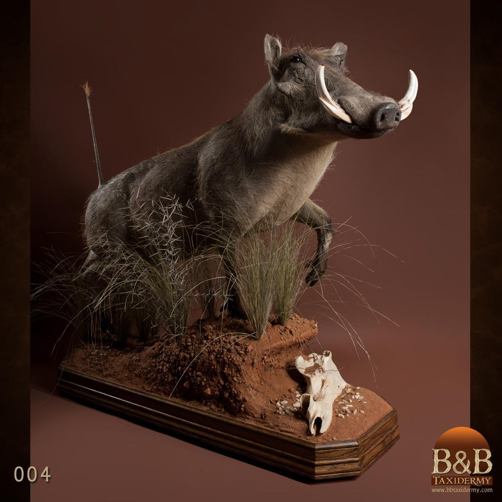 Warthog Amp Bushpig Taxidermy By B Amp B Taxidermy