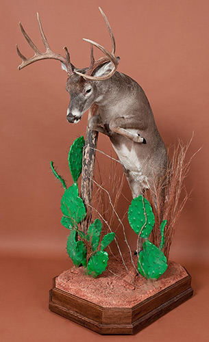 Life Size Taxidermy Mounts Habitats Bases
