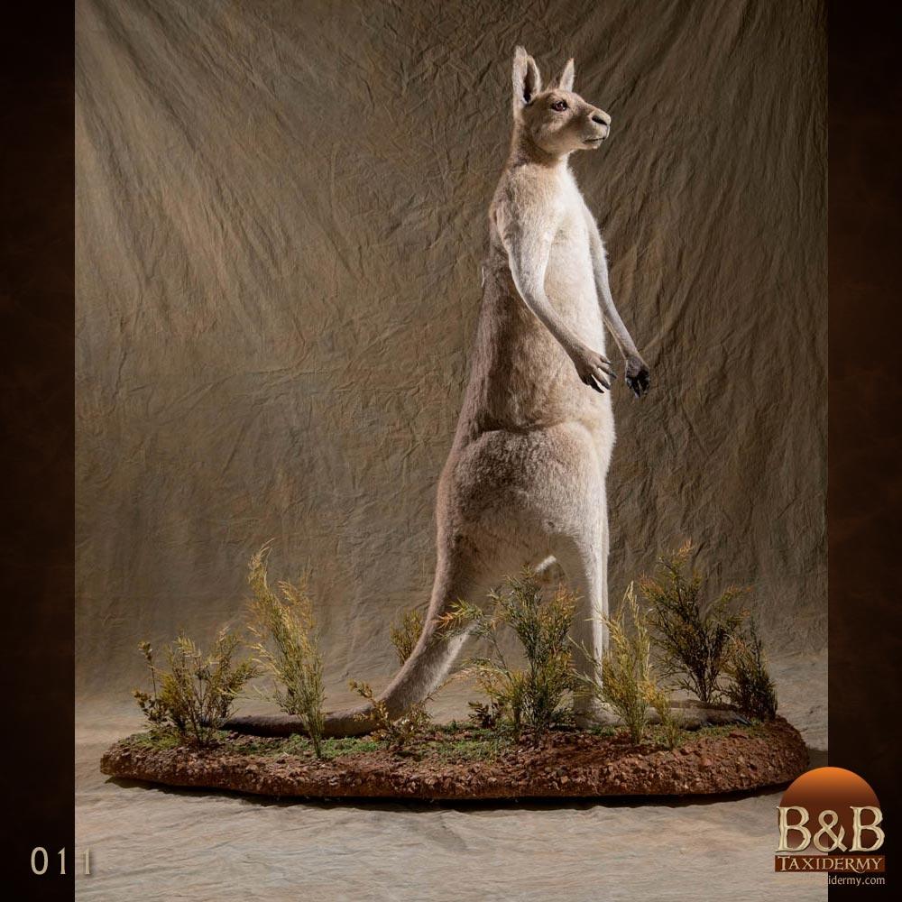 Australian Taxidermy